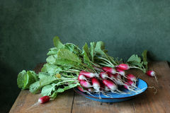 Fresh garden radish. Top view. Fresh garden radish with a tops of vegetable on a wooden table. Top view Stock Images