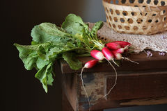 Fresh garden radish. Fresh garden radish with a tops of vegetable on a wooden table Stock Image