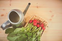 Fresh garden radish in wicker basket and watering can. On wooden background. Top view Royalty Free Stock Images