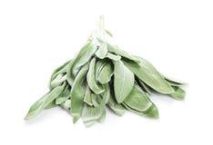 Fresh garden sage herb Royalty Free Stock Photo