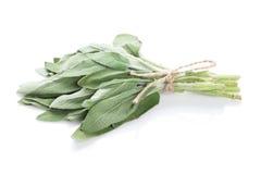 Fresh garden sage herb Stock Photography