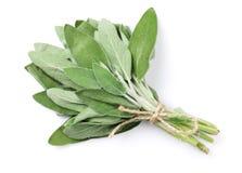 Fresh garden sage herb Royalty Free Stock Photos