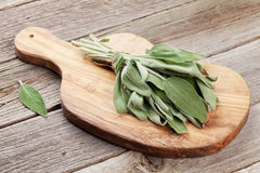 Fresh garden sage herb Royalty Free Stock Images