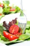 Fresh garden salad Stock Images