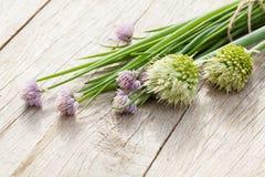 Fresh garden spring onion Royalty Free Stock Image