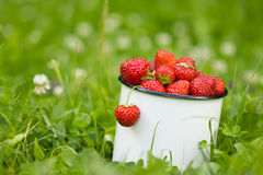 Fresh garden strawberry in cup. Stock Photo