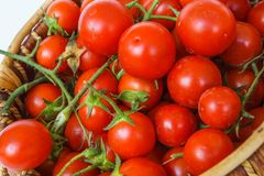 Fresh garden tomatoes in a basket, Stock Photo