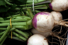 Fresh Garden Vegetables Royalty Free Stock Images