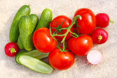 Fresh garden vegetables. Fresh garden vegetables isolated on background Royalty Free Stock Photos