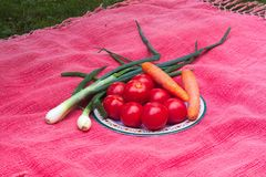 Fresh garden vegetables tomatoes, carrots and onions. Lying on a red tablecloth gross Stock Image