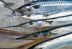 Fresh garfish for sale Royalty Free Stock Photos