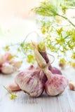 Fresh garlic. Cloves and bulbs of fresh garlic royalty free stock photos