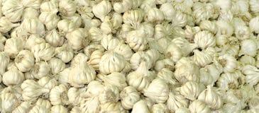 Fresh garlic. Bunch of fresh white garlic stock images
