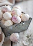 Fresh garlic. In metal basket stock image