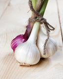 Fresh garlic Stock Photos