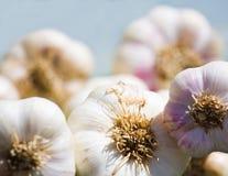 Fresh Garlic  Abstract Royalty Free Stock Photo