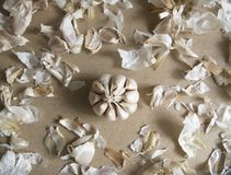 Garlic Bulb and Bumpy on the MDF wooden plate board Texture Background royalty free stock image