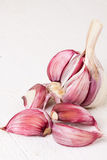 Fresh garlic bulb with loose cloves royalty free stock photography
