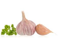 Fresh garlic bulb stock photos
