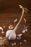 Fresh garlic Stock Photos