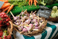 Fresh garlic bulbs for sale. Vegetables are for sale in a farmers market in Paris including garlic, carrots, and radishes. Hand written price signs in French Royalty Free Stock Images
