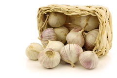 Fresh garlic bulbs in a  woven basket Stock Photos