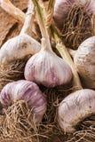 Fresh garlic Stock Photo