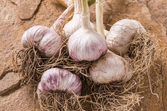 Fresh garlic Stock Photography