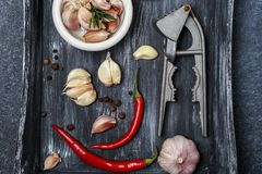 Fresh garlic with chili pepper on dark background. Garlic bulbs.  Royalty Free Stock Image