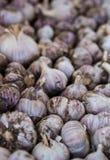Fresh garlic close up Stock Image