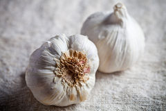 Fresh garlic Royalty Free Stock Image
