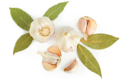 Fresh garlic and dry laulel Stock Images