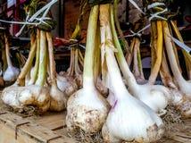 Fresh Garlic at Farmers Market horizontal. Fresh garlic at farmers market on wood crate stock photos