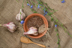 Fresh garlic and flax seeds Royalty Free Stock Photography
