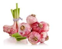 Fresh garlic fruits isolated Royalty Free Stock Image