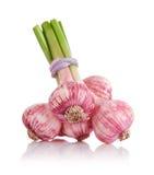 Fresh garlic fruits isolated on white Stock Photo
