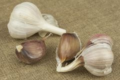Fresh garlic. Garlic as an alternative medicine against colds and flu. Royalty Free Stock Photography