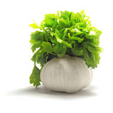 Fresh garlic with green parsley Stock Photos