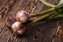 Fresh garlic Stock Photography