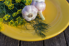 Fresh garlic, parsley and dill in a yellow plate Royalty Free Stock Images