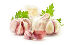 Fresh garlic with parsley isolated on white Royalty Free Stock Photos