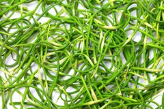 Fresh garlic scape Stock Photos