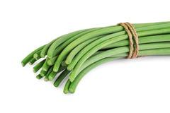 Fresh garlic shoots Royalty Free Stock Photo