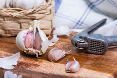 Fresh garlic and squeezer Royalty Free Stock Photos
