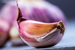 Fresh garlic - studio concept Royalty Free Stock Images