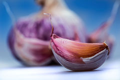 Fresh garlic - studio concept Stock Photography
