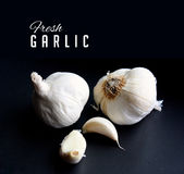 Fresh garlic with typography and copy space Royalty Free Stock Images