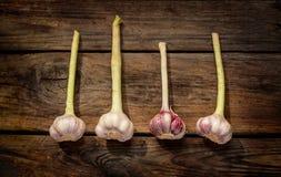 Fresh garlic on vintage planked wood table stock image