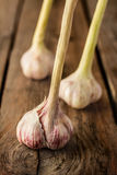 Fresh garlic on vintage planked wood table Stock Images
