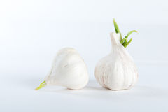Fresh garlic Stock Image
